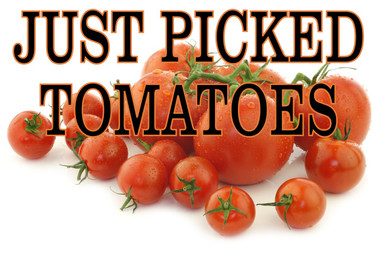 Just Picked Tomatoes In Living Color Get You Noticed.