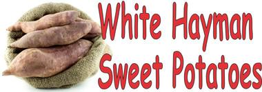 White Hayman Sweet Potatoes