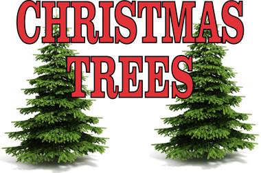Christmas Trees Banner.