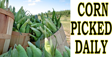 Corn Picked Daily Is a High Impact Banner that Draws Customer Into Your Market.