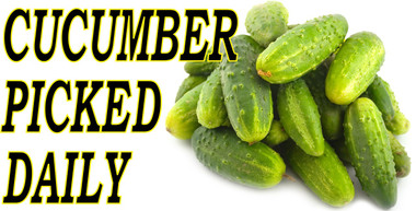 Cucumbers Picked Daily Banner Brings Customers In.