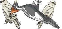 category-birds-02.png