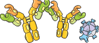 category-cell-biology-01.png