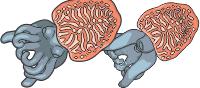 category-invertebrates-02.png
