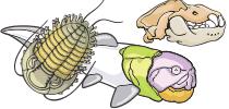 category-paleontology-03.png