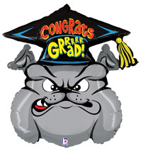 "34"" Bull Dog with Graduation Cap"