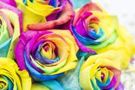 Half a dozen rainbow roses