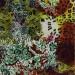 Charmeuse Silk Wild Rags #2- Jungle Fever