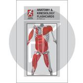 Anatomy Kinesiology Flashcards