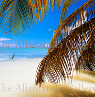 Anegada Palm Frond