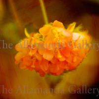 flower cpt