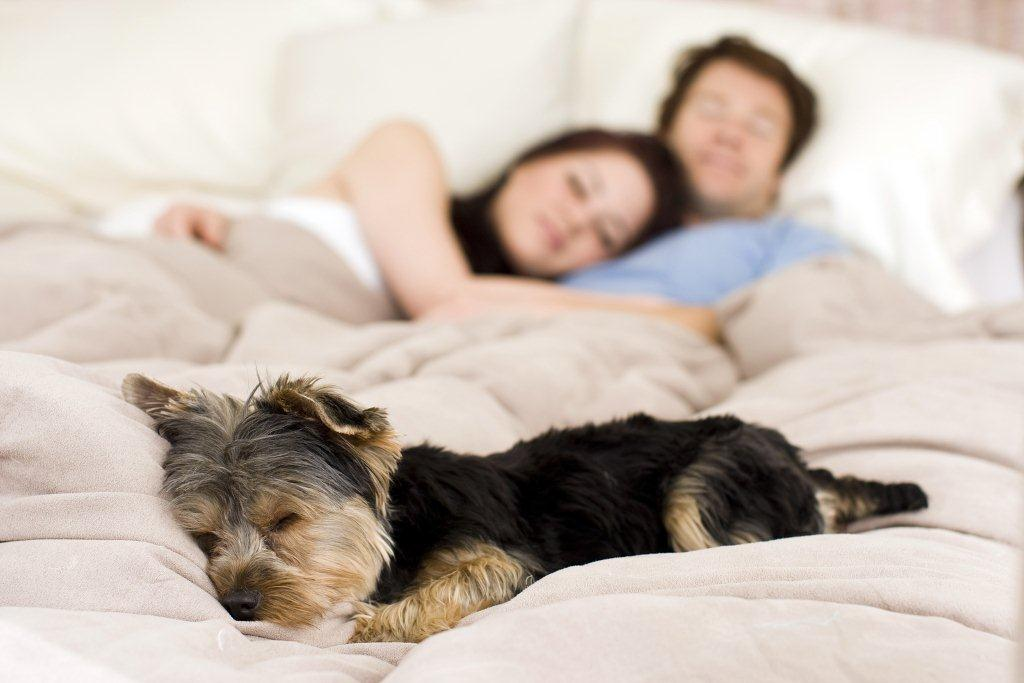 bigstock-happy-couple-laying-in-bed-wit-15695993.jpg