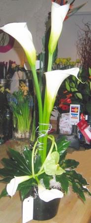 corporate-flowers1-lg.jpg
