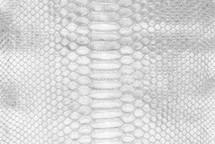 Python Skin Crisp Silver