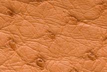 Ostrich Skin Patte Orange