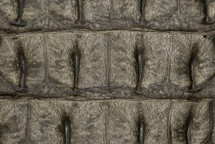 Crocodile Backstrap Serpentine without Crown