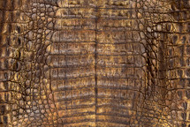 Caiman Skin Belly Zak Butterscotch