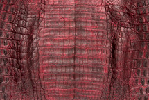 Caiman Skin Belly Zak Red