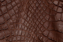 Alligator Skin Leg Matte Saddle - XL