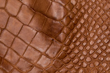 Alligator Skin Leg Matte Cognac - XL