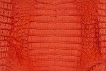 Caiman Skin Belly Matte Orange - XS
