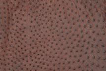 Ostrich Skin Almond Classic