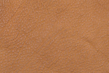 American Bison Skin Cognac