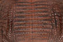 Caiman Skin Belly Vintage Orange