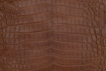 Nile Crocodile Skin Belly Matte Whiskey