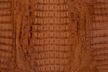Caiman Skin Hornback Matte Cognac