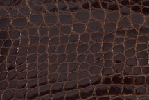 Alligator Flank Skin Glazed Brown