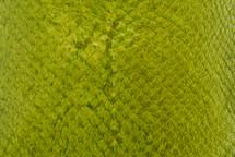 Salmon Skin Glazed Green