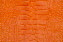 Alligator Skin Belly Matte Orange 23/27 cm Grade 4
