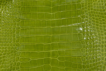 Alligator Skin Belly Glazed Lime - 23/27 cm