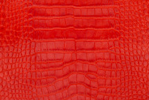 Alligator Skin Belly Matte Red - 23/27 cm