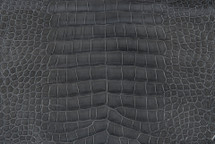 Alligator Skin Belly Glazed Grey - 30/34 cm