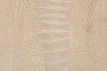 Ostrich Leg Matte Bone