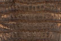 Caiman Tail Marble Desert