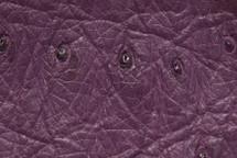 Ostrich Skin African Violet