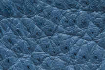 Ostrich Skin Clemaris