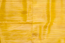 Eel Skin Panel Matte Yellow