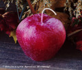 HARVEST APPLE Candle, Small