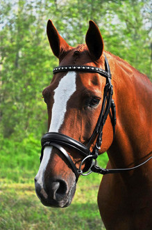 KL Select Red Barn Cadence Snaffle Bridle
