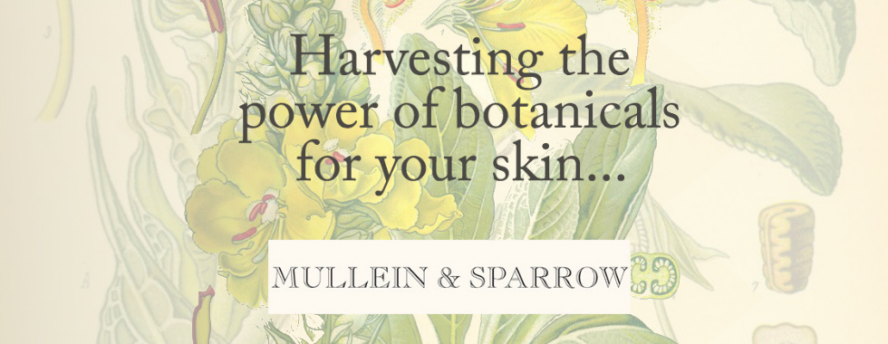 mullein-and-sparrow-amorganica.jpg