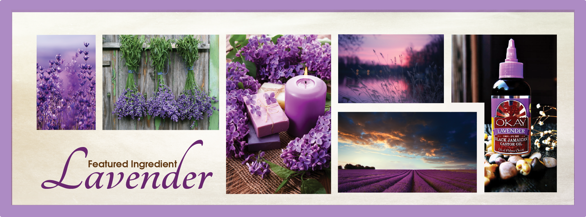 lavender-new-website-layout-summer-2016-07.png