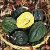 Wholesale Table Queen Winter Acron Squash Seeds-1/4 Pound