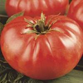 Bulk Mortgage Lifter Tomato