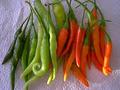 Bulk Tabasco Pepper Seeds