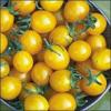 Yellow Cherry Tomato Seeds-Organic