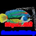 Peacock Wrasse Swimming Fish (26511)